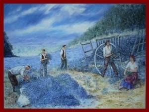 Les cueilleurs de lavande